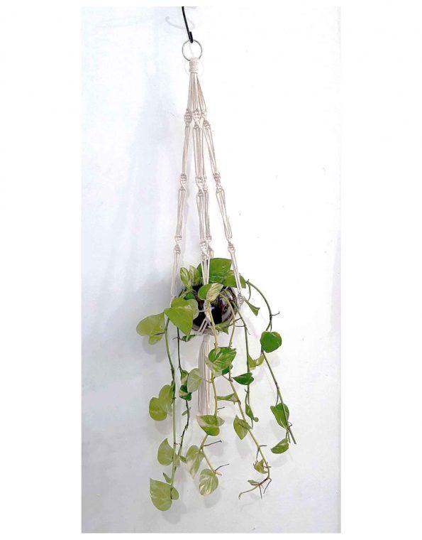 Magicknots-simple-plant-hanger