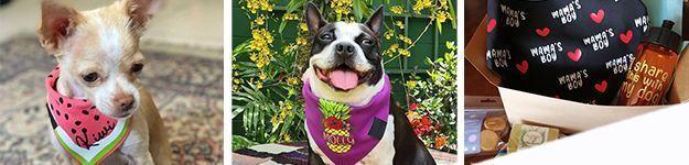 banner happydog 625x150 1